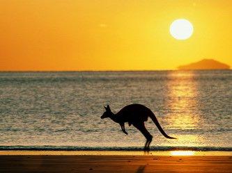 Почему кенгуру живут только в