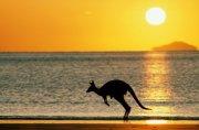 Почему кенгуру живут только в Австралии?